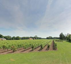 Wijngaard Hesselink (Winterswijk)